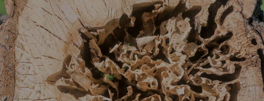 Maison en bois rond: Prévenir la décomposition du bois et les insectes